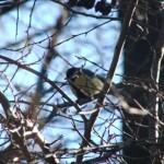Madarak és fák napja – május 10