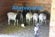 allatvasar-default-kep